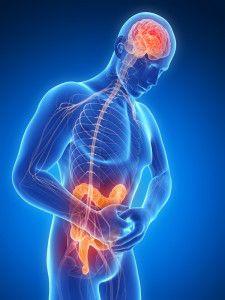 Lien Intestins-Cerveau